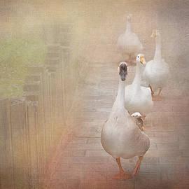 Ducks on Misty Path by Terry Davis
