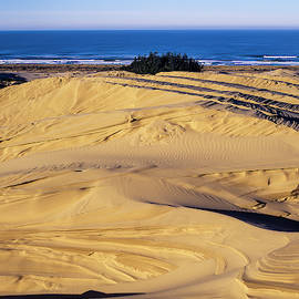 Dune Erosion by Robert Potts