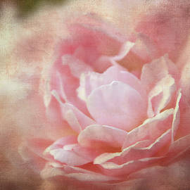 Dusty Rose Textured by Terry Davis