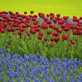 Dutch Flowers by Cathy P Jones