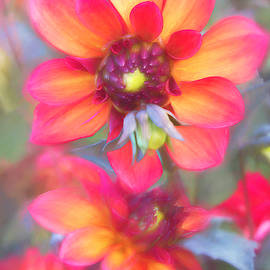 Dynamic Dahlia Duo by TL Wilson Photography by Teresa Wilson