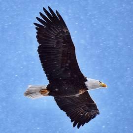 Eagle Amongst the Snowflakes by Dana Hardy