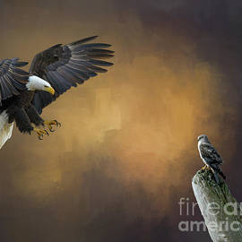 Jim Hatch - Eagle and Hawk