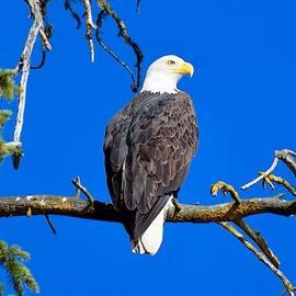 Eagle Eye by Dana Hardy