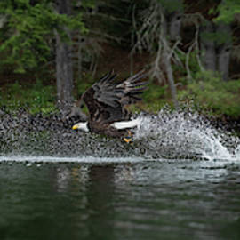 Eagle Fishing by Dale J Martin
