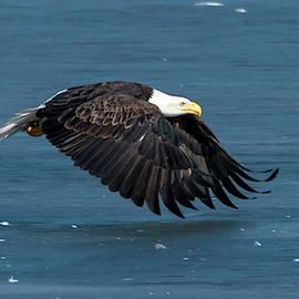 Eagle Flare by Steve Ferro