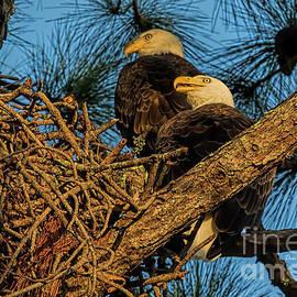 Eagle Pair by Deborah Benoit