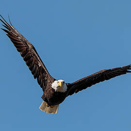 Eagle Sees You by Loree Johnson