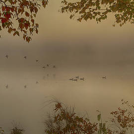 Early Arrivals Rangeley Maine by Jeff Folger