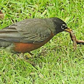 Early Bird Gets The Biggest Worm by Kathy M Krause