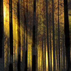 Early light in the Pines