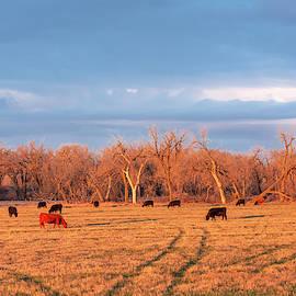Early Morning Herd by Todd Klassy