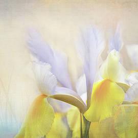 Early Spring Iris by Terry Davis