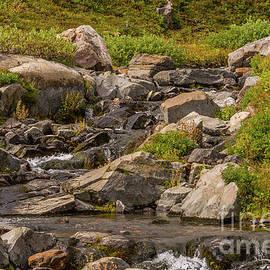 Edith Creek Closeup by Marv Vandehey