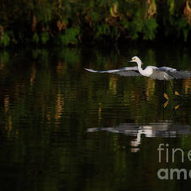 Egret at Golden surise by Ruth Jolly