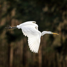 Morey Gers - Egret Flight