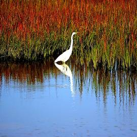 Cynthia Guinn - Egret Looking For Lizards