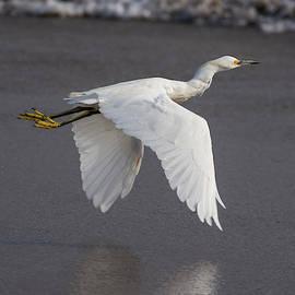 Egret o'er the Shore by Bruce Frye