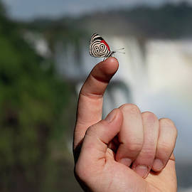 Eighty Eight Butterfly In Front Of The Iguazu Falls by Mark Hunter
