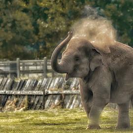 Elephant by Chris Boulton