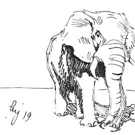 Elephant In Bright Sunlight Drawing by Mike Jory