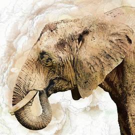 Elephant  by Marcia Colelli