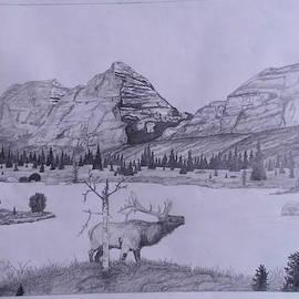 Elk Bugling  by Michael Hoback