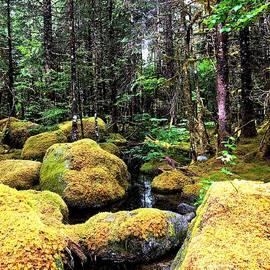 Yuri Tomashevi - Enchanted Forest