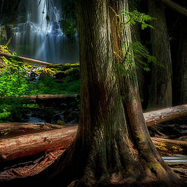 Enchanting Forest by Cat Connor