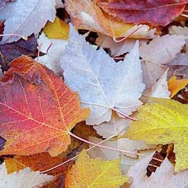 End Of Autumn by David Millenheft
