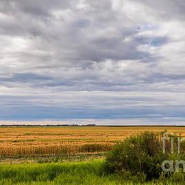 Endless Prairie Skies by Alma Danison