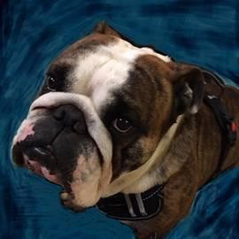 English Bulldog Gus, Up Close by Adrienne Hantz Kelley