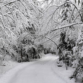 David T Wilkinson - Entering a Winter Wonderland