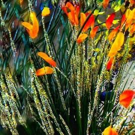Equinox by Lisa Simmons