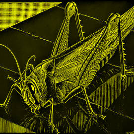 Escher 176 by Rob Hans