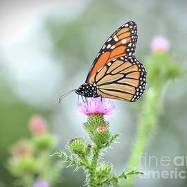 Ethereal Beauty - Monarch Butterfly by Kerri Farley