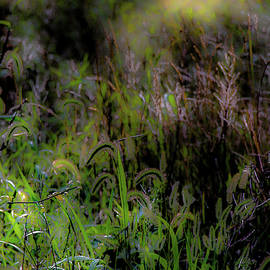 Ethereal Field by Donna Fonseca Newton