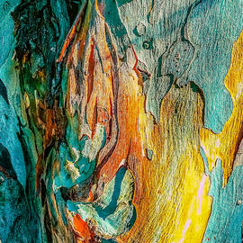 Eucalyptus - Natural Abstract
