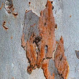 Eucalyptus Tree Road Map by Joy Watson