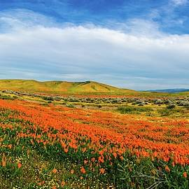 Evening Beauty at the Reserve Panorama - Superbloom 2019 by Lynn Bauer