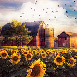 Evening Light on the Autumn Sunflowers by Debra and Dave Vanderlaan