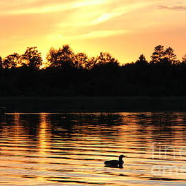 Evenings with the Loons by Ann Brown