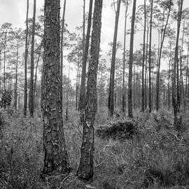 Everglades 041903 by Rudy Umans
