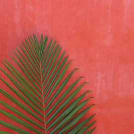 Exotic Background by Lucgillet