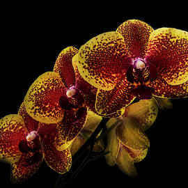 Exotic Orchid Beauty by Debra and Dave Vanderlaan