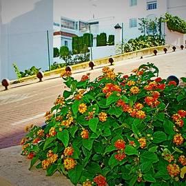 Exotic Spain 2 by Loretta S