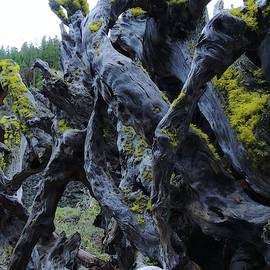 Exposed And Gnarly by Vincent Green