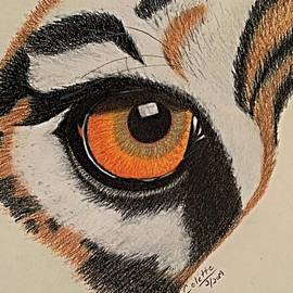Eye of the tiger by Colette Lee