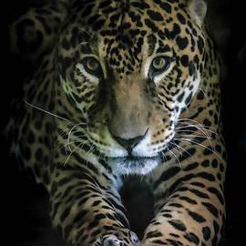 Eyes Of The Leopard II by Athena Mckinzie
