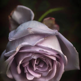 Fading Bloom by Laura Roberts